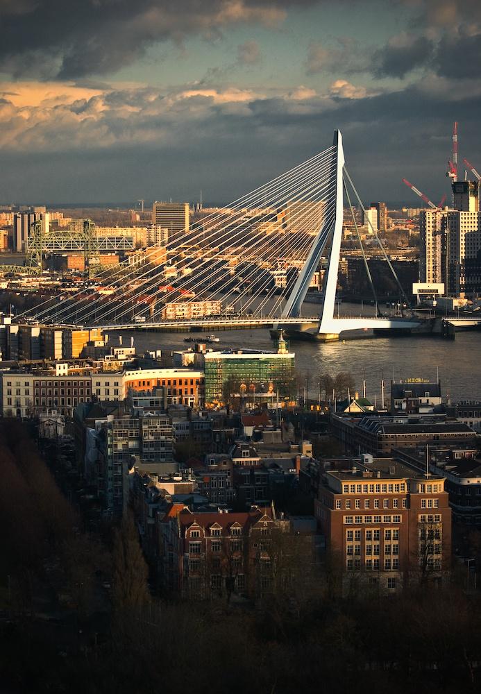 Nowoczesny Rotterdam (7)