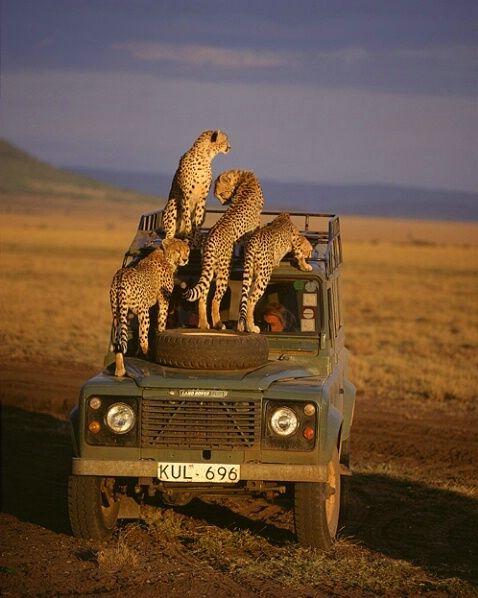 Objazdowe wakacje Kenia (3)